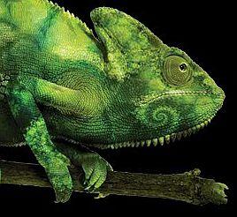 SuSE Chameleon