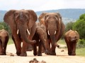Elephants, Hadoop © JONATHAN PLEDGER Shutterstock 2012