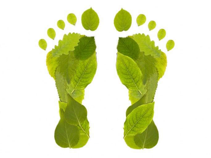 carbon footprint green leaf © grafvision Shutterstock