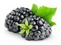 Blackberry fruit nice and luscious © Anna Kucherova Shutterstock