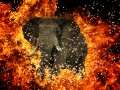 Elephant fire spark apache hadoop big data © HeartBeat Shutterstock