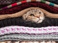 privacy hiding AET, kitten, cat layers blanket privacy surveillance © Koldunov Alexey Shutterstock