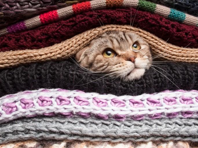 privacy hiding AET, kitten, cat layers blanket privacy surveillance © Koldunov Alexey Shutterstock