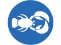 sport lobster logo lead