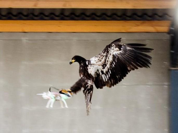eagle drones