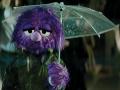 Jackson Puppet Sad